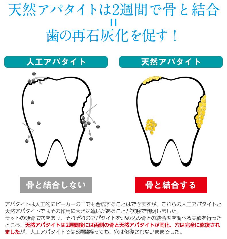 天然アパタイトは2週間で骨と結合  歯の再石灰化を促す!