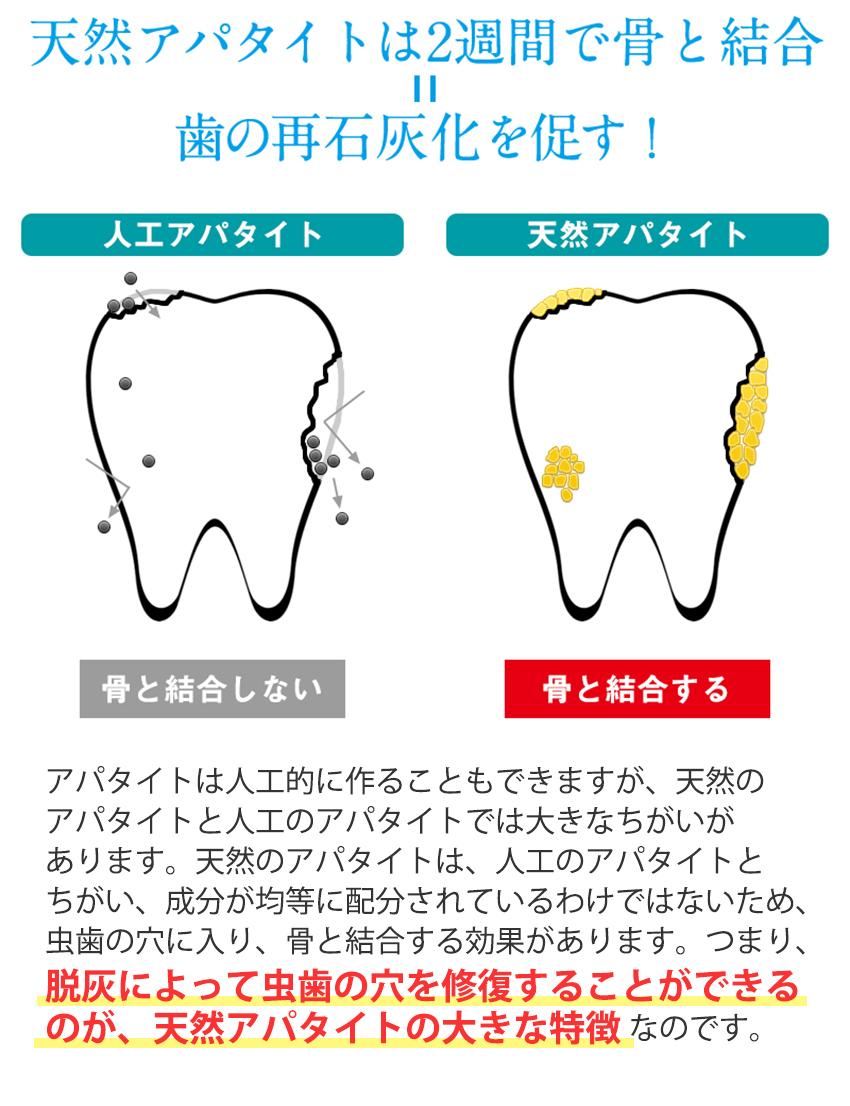 天然アパタイトは2週間で骨と結合=歯の再石灰化を促す!